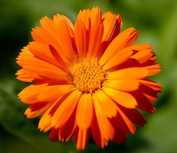 скачать программу цветок - фото 3